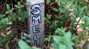Sensory gardens - smell
